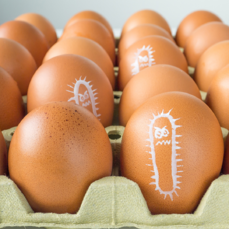 salmonella and food safety