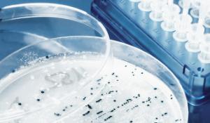 The Clostridium Conundrum