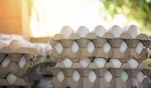 Top 8 Ways to Tackle Salmonella in Live Poultry Production